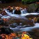 Cascades of Gold by DawsonImages