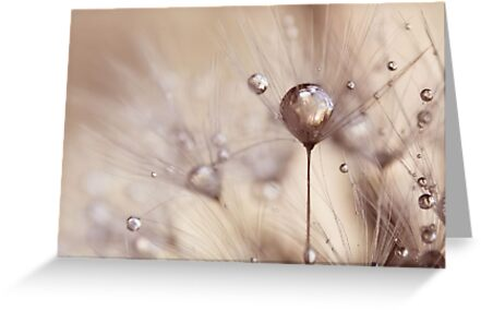 a touch of gold by Ingrid Beddoes