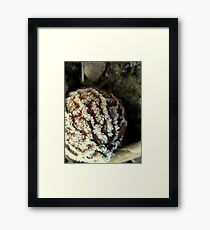 Black walnut with hoarfrost Framed Print