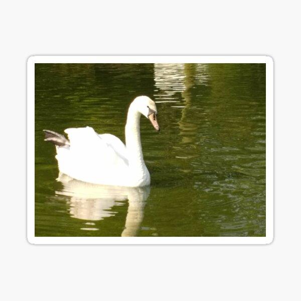 M.I. #55 |☼| Swan - Shot 13 (Pearson Park) Sticker