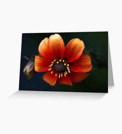 Macro Zinnia Greeting Card