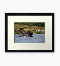 Hippos In Love Framed Print