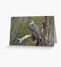 Eyes on you Greeting Card