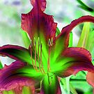 My Special Lily © by Dawn Becker
