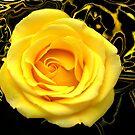 Abstract Rose Macro by glennc70000