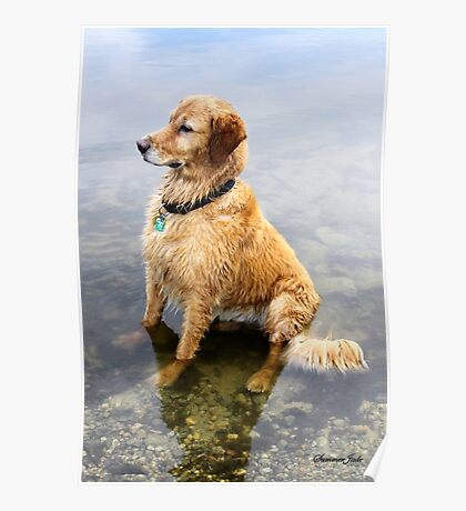 Wet Dog ~ Cooling Off At the Lake Poster