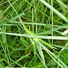 8/2 I am the grass. I am the grass. You can't see me. I am the grass. by Evelyn Bach