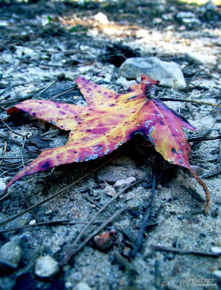 A Moody Little Leaf by shimschoot