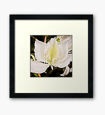 Beautiful butterfly tree Framed Print