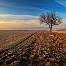 ~Farmtree~ by Delfino