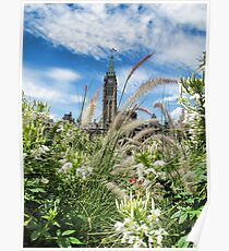Decorative Fountain Grass & White Flowers in front of the Peace Tower, Parliament Hill, Ottawa, Canada Poster
