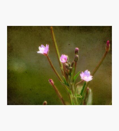 Little Treasures of Spring Fotodruck