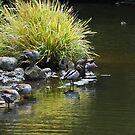Ducks for Grace by Catherine Davis