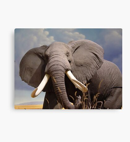 Big Ear Elephant Canvas Print