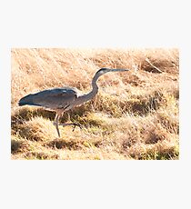 Prancing Along in the Grass Photographic Print