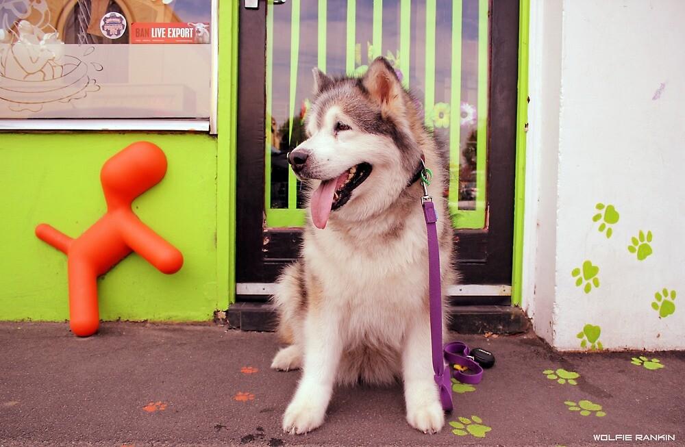 Paws - Katie outside the pet shop by WolfieRankin
