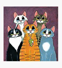 A Feline Family Portrait Photographic Print