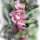 Rose Orchids by Don Wright