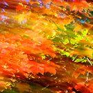 Fall impression 717 - 2011 by Joseph Rotindo