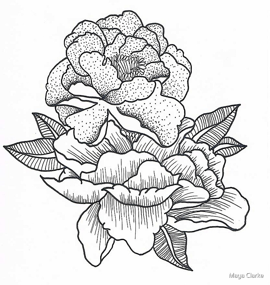 Carnations by Maya Clarke
