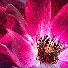 Florida Rose by Beth Mason