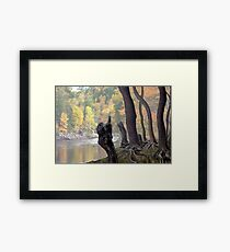 Old Roots Framed Print