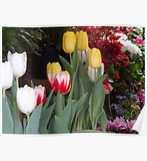 Flowers - Flores Poster