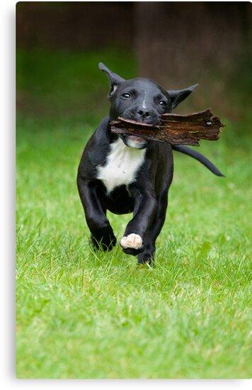 Bark 'in' Dog by Mark Cooper