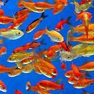 Goldfish by artstoreroom