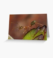 green ant Greeting Card