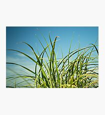Grassy Photographic Print