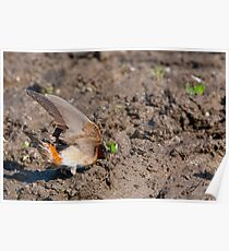 A Small Window Of Opportunity - The Cliff Swallow Poster