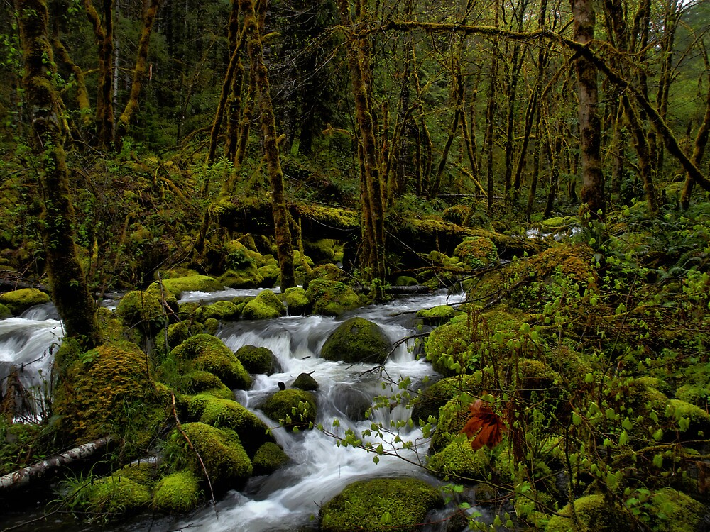 Beauty At All Times by Charles & Patricia   Harkins ~ Picture Oregon