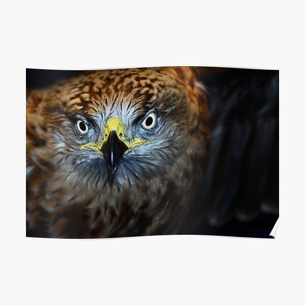 Owl (Edinburgh) Poster