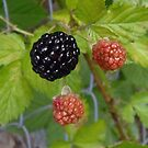 Very Berry by WildestArt