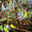 Birds, Birds, Birds! by Wanda Raines