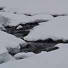 White River on a White Day by kimmers64