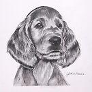 Irish Setter Puppy by J.D. Bowman
