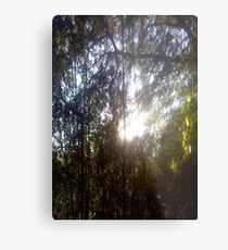 Forest/Woods Metal Print