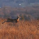 """Deer """"in-flight"""" :) by Alinka"""
