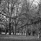 A path in Autumn by closho