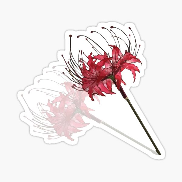 Red Lycoris Radiata Flower Gift Transparent Spider  Japanese Lily of Wire and  Sticker