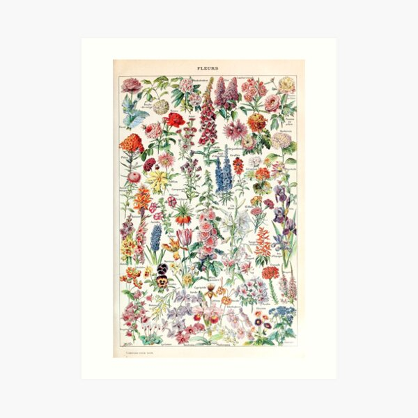 Adolphe Millot - Fleurs pour tous - French vintage poster Art Print