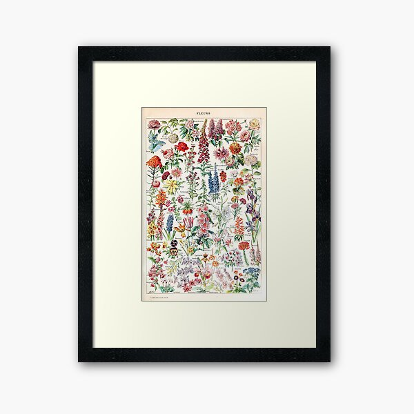Adolphe Millot - Fleurs pour tous - French vintage poster Framed Art Print