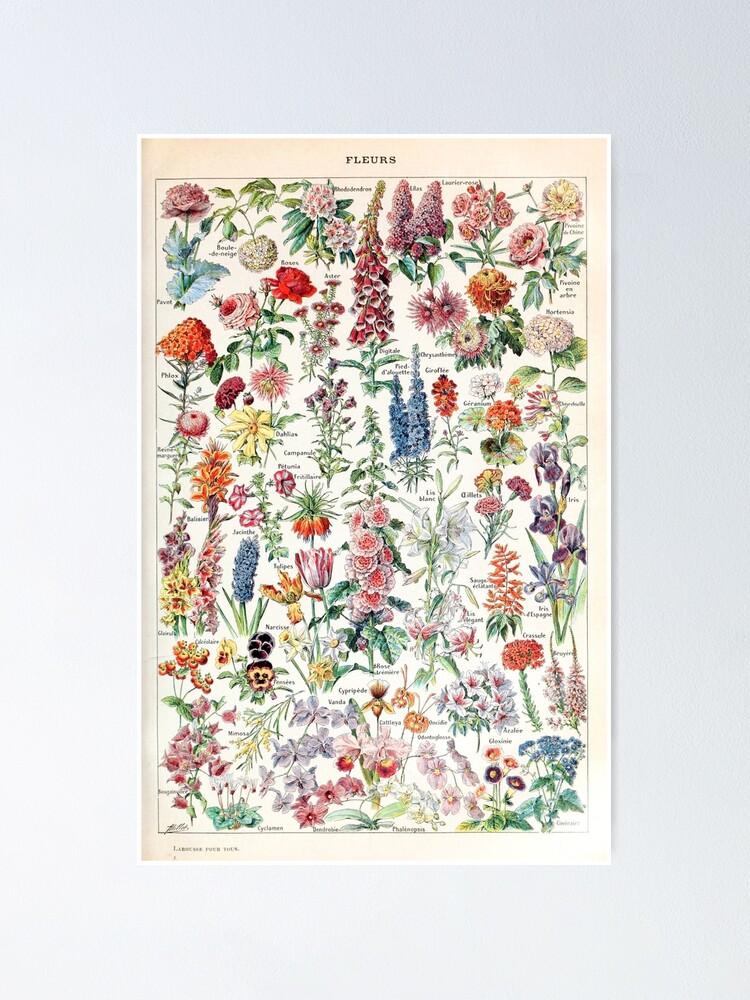 Alternate view of Adolphe Millot - Fleurs pour tous - French vintage poster Poster