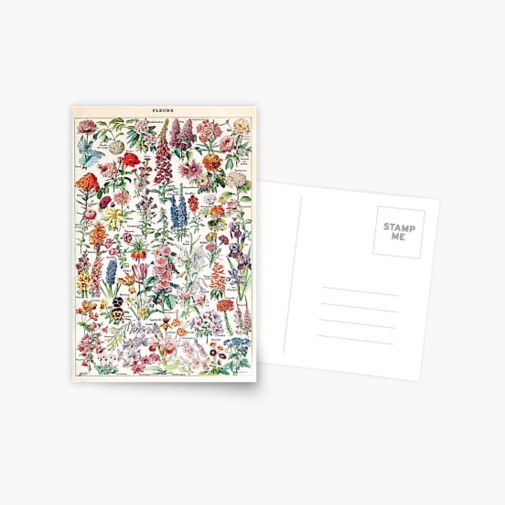 Adolphe Millot - Fleurs pour tous - French vintage poster Postal