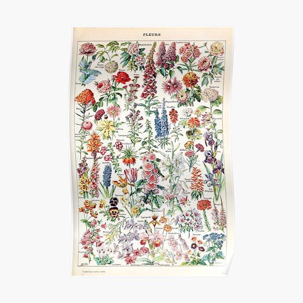 Adolphe Millot - Fleurs pour tous (Blumen für alle) - gemeinfrei Poster