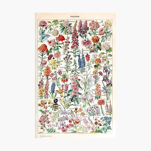 Adolphe Millot - Fleurs pour tous - French vintage poster Impression photo