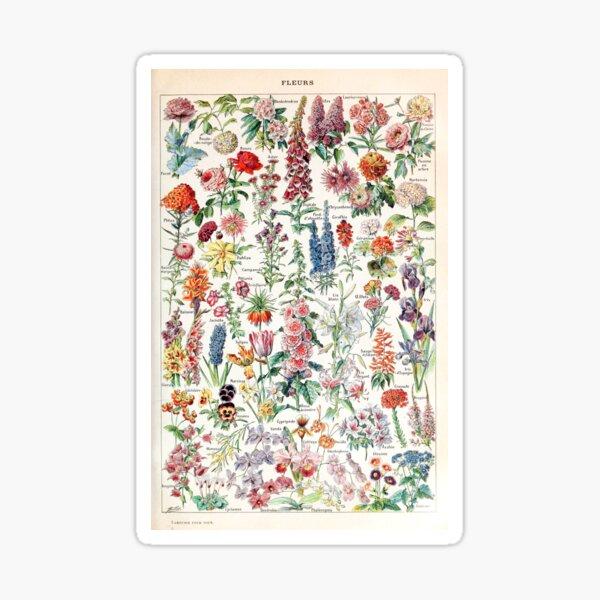 Adolphe Millot - Fleurs pour tous - French vintage poster Sticker