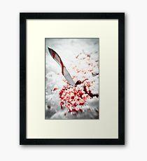 Whetted  Framed Print
